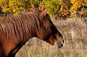 Mark Newman - Horse In The Yukon Canada