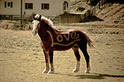 Horse Hill Prints - Horse Love Print by Trish Tritz