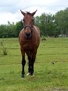Nicki Bennett - Horse