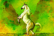 White Horses Painting Framed Prints - Horse paintings 010 Framed Print by Catf