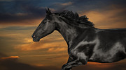 Horse Artwork Prints - Horse portrait at sunset Print by Wolf Shadow  Photography
