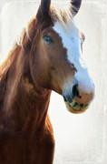 Joan Bertucci - Horse Power