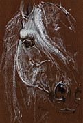 Horse Pastels Posters - Horse Quick  Sketch Soft And Oil Pastel  Poster by Angel  Tarantella