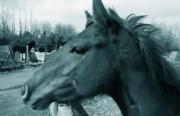 Horse Sense Print by Steven Milner