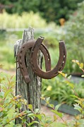 Good Luck Framed Prints - Horse Shoes Framed Print by Heather Harrison