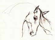 Horse Drawing Framed Prints - Horse Sketch Framed Print by Angel  Tarantella