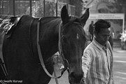 Race Horse Photos - Horse by Swathi Kurunji