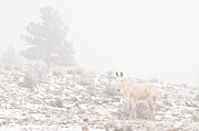 James BO  Insogna - Horse with Winter Season Snow and Fog