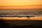 Wave Riders Prints - Horseback at Sundown Print by Angi Parks