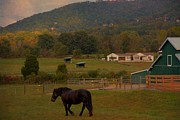 Barn In The Woods Photos - Horseback Riding In Gatlinburg by Dan Sproul