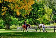 Mikki Cucuzzo - Horseback Riding