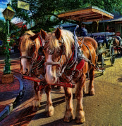 Carriage Horse Photos - Horses - The Clydesdale Stallions by Lee Dos Santos