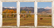 Rocky Mountains Greeting Cards Prints - Horses and Autumn Colorado Front Range Picture Window View Print by James Bo Insogna