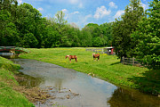 Country Scene Framed Prints - Horses At Home on the Range Framed Print by Paul Ward