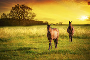Horse Posters - Horses At Sunset Poster by Christopher and Amanda Elwell