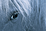 Blue Horse Framed Prints - Horses Eye Blue Framed Print by Jennie Marie Schell