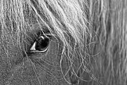 Gray Horses Photos - Horses Eye Monochrome by Jennie Marie Schell