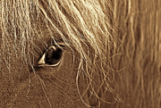 Brown Horses Posters - Horses Eye Sepia Poster by Jennie Marie Schell