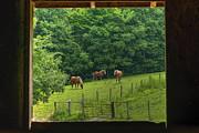 Dan Friend - Horses feeding in field