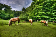 Horses Grazing In Field Print by Dan Friend