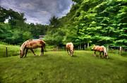 Dan Friend - Horses grazing in field