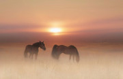 Valerie Anne Kelly - Horses in a misty dawn