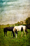 Meadow Posters - Horses in Field Poster by Amy Cicconi