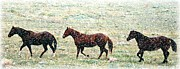 Forelock Art - Horses In Snow fall by Barbara Chichester