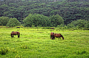 Moorea Photos - Horses in the Tropics by Linda Phelps