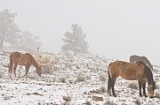 James BO  Insogna - Horses in the Winter Snow and Fog