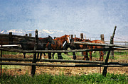 Horse Stable Mixed Media Posters - Horses in Utah Poster by Vicki McLead