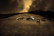 Tamalpais Posters - Horses of The Moon Mill Valley California 5D22673 sepia Poster by Wingsdomain Art and Photography