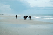 Wild Horses Digital Art Prints - Horses of the OBX Print by Kelvin Booker