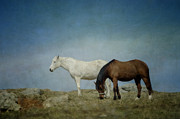 Equine Photo Posters - Horses On A Hill Poster by Kathy Jennings