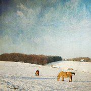 Dirk Wuestenhagen - Horses on a winter day
