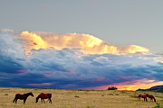 Storm Prints Photo Prints - Horses On The Storm Print by James Bo Insogna