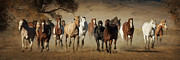 Wild Horses Prints - Horses Running Free Print by Heather Swan