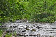 Jane McIlroy - Horseshoe Falls Llangollen