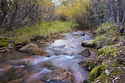 Fall Photos Framed Prints - Horsethief Creek - Cripple Creek Colorado Framed Print by Brian Harig