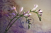Judy Palkimas - Hosta Soft Delicate And...