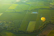Ballooning Prints - Hot Air Balloon Over Napa Valley California Print by Diane Diederich