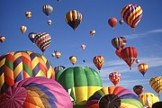 American Prints - Hot Air Balloons - Albuquerque Print by Peter Art Print Gallery  - Paintings Photos Posters
