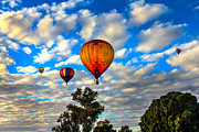 Balloon Aircraft Prints - Hot Air Balloons Over Trees Print by Robert Bales