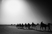 Camel Photo Prints - hot desert sun beating down on camel train in the sahara desert at Douz Tunisia Print by Joe Fox