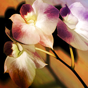 Orchids Digital Art Prints - Hot Orchid Nights Print by Holly Kempe