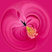 Nature Study Photo Posters - Hot Pink and Round Poster by Anne Gilbert