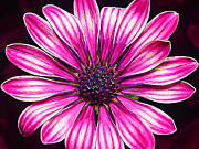 Vibrant Colors Digital Art Prints - Hot Pink Daisy Print by ABeautifulSky  Photography
