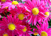 Flowers Yellow Daisy Prints - Hot Pink Print by Julie Palencia