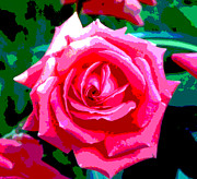 Roses Digital Art - Hot Pink Rose by Alys Caviness-Gober