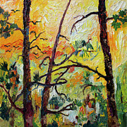 Ginette Callaway - Hot Summer Sunset Through The Pines